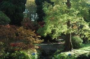 bodnant-trees-2-small